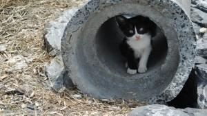 Appli : c'est la mère Michel qui a perdu son chat et l'a retrouvé sur Mirza